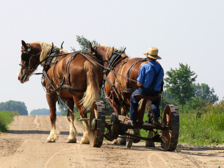 amish-wagon_4662